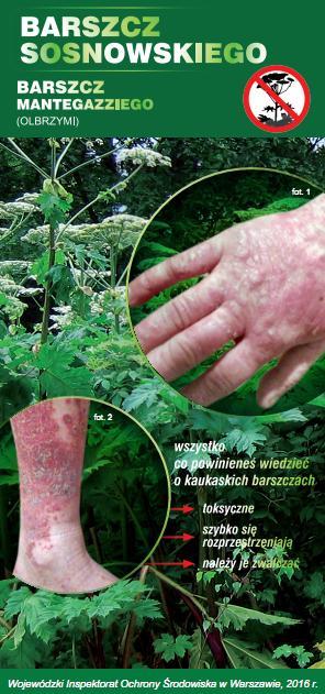 barszcz-sosnowskiego-ulotka