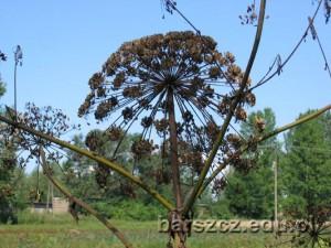 barszcz-owoce04